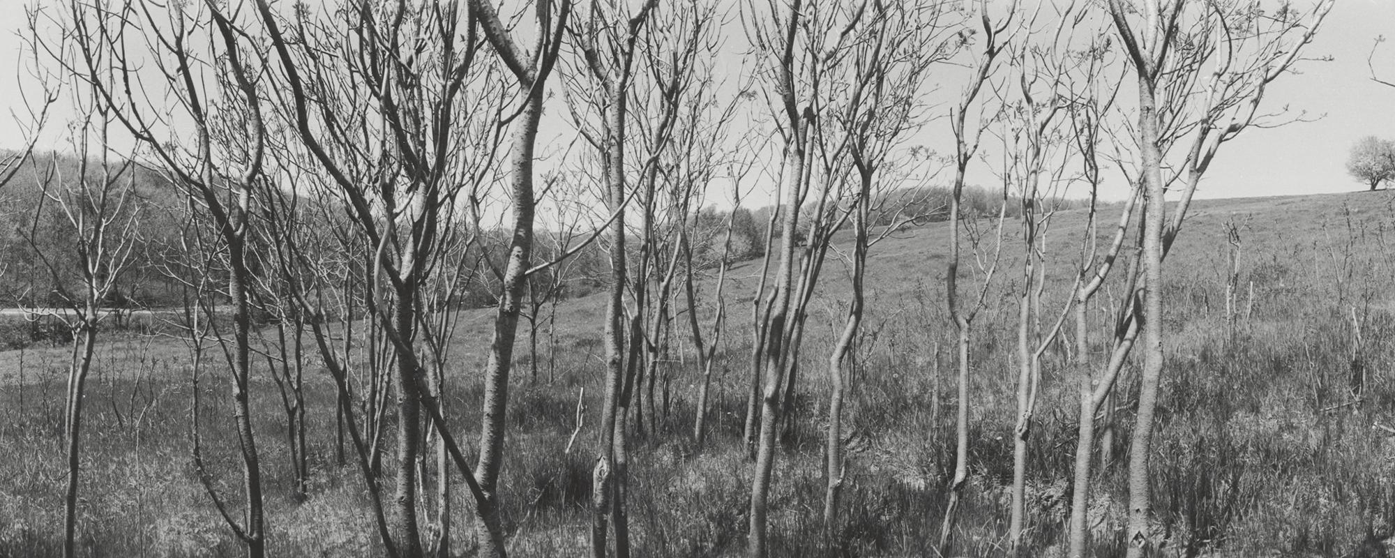 Laura Volkerding, Sumac Grove, Westby, Wisconsin (detail), 1978, Laura Volkerding Archive, 96.96.47